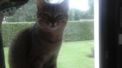 Tempet, chat Gouttière
