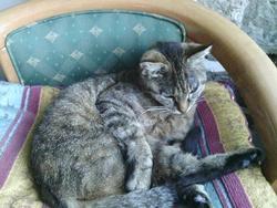 Tempête, chat Gouttière