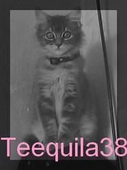 Téquila, chat