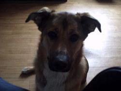 Tess, chien