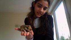 Tesse, rongeur Hamster