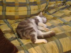 Tetouilloux, chat Gouttière