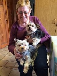 Tetty Et Lola 1 An, chien Yorkshire Terrier