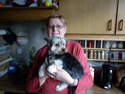 Tetty, chien Yorkshire Terrier