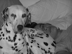 Texas, chien Dalmatien