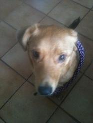 Thais, chien