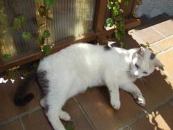 Thalis, chat Gouttière
