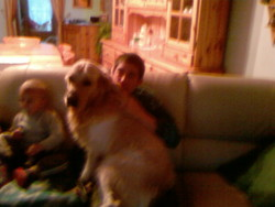 Thalys, chien Golden Retriever
