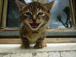 Thea, chat Gouttière