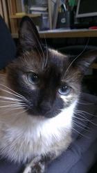 Thèandras, chat Gouttière