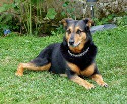 Thelma, chien
