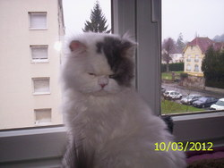 Theo, chat Persan