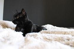 Théo, chat