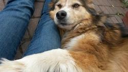 Théo, chien