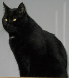 Thomas, chat Gouttière