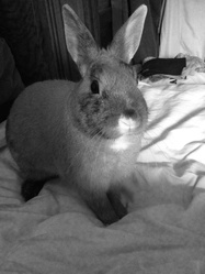 Thomy, rongeur Lapin