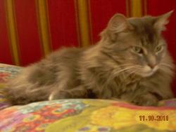 Thysis, chat Gouttière