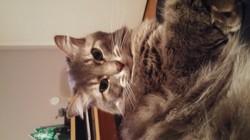 Ti-Gars, chat Gouttière
