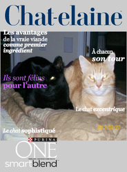 Ti-Jaune Et Amy, chat