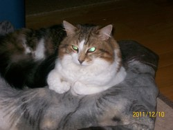 Ti-Loup, chat