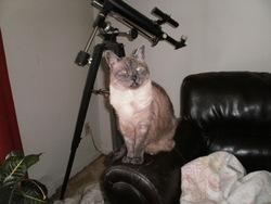 Ti-Mine, chat Siamois