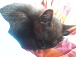 Ti'Mousse, chat
