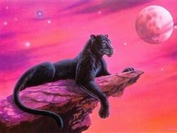 Jenny, chat Siamois
