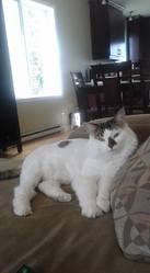 Tia , chat Gouttière