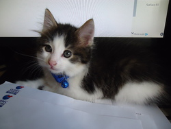 Tibi, chat Gouttière