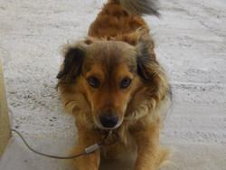 Tibouille, chien