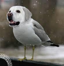 Tic Tac, chien Épagneul breton