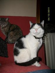 Ticha , chat Gouttière