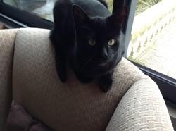 Tichat, chat Gouttière