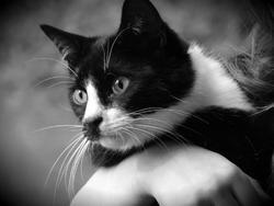 Tichou, chat Gouttière