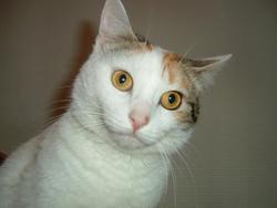 Ticoeur, chat Gouttière