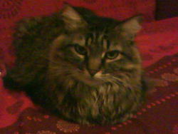 Tictac, chat Gouttière