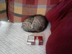 Tidgi, chat Gouttière