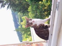 Tidite, chat Gouttière