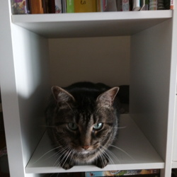 Tiego , chat Gouttière