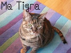 Tigra, chat