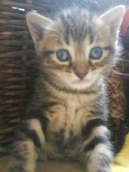 Dragibus, chat Gouttière