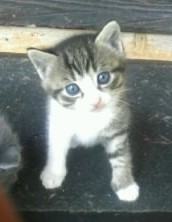 Tigrou Perdu , chat Gouttière