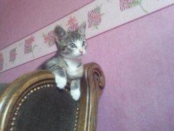 Tiguy, chat