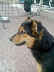 Tiko, chien