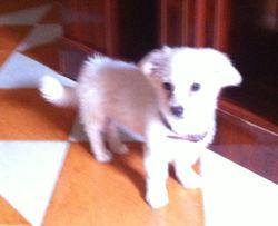 Tiky, chien
