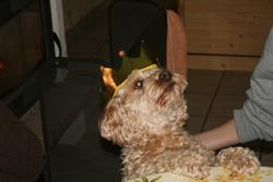 Tilou, chien