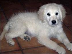Tiloulou, chien