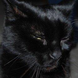Tim, chat Gouttière