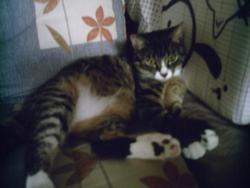 Timéo, chat Gouttière