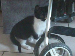 Timie, chat